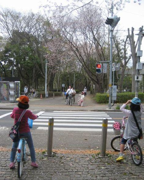 100411sakura1